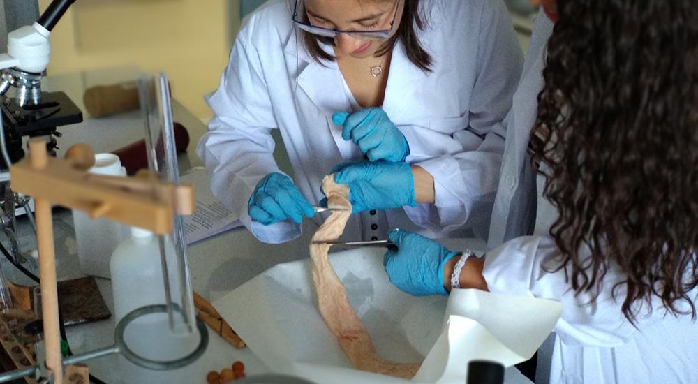 Disecciones en el laboratorio - Colegio Alarcón